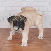 Parry Pug Peeing