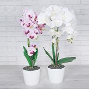 Large Orchid in Pot Set of Two